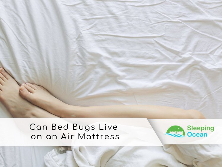 Can Bed Bugs Live On An Air Mattress